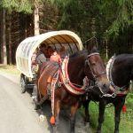 Kremserfahrt im Erzgebirge